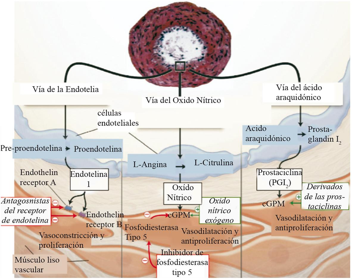 Alimentos Que Te Subirán La Presión Arterial De Manera Inmediata